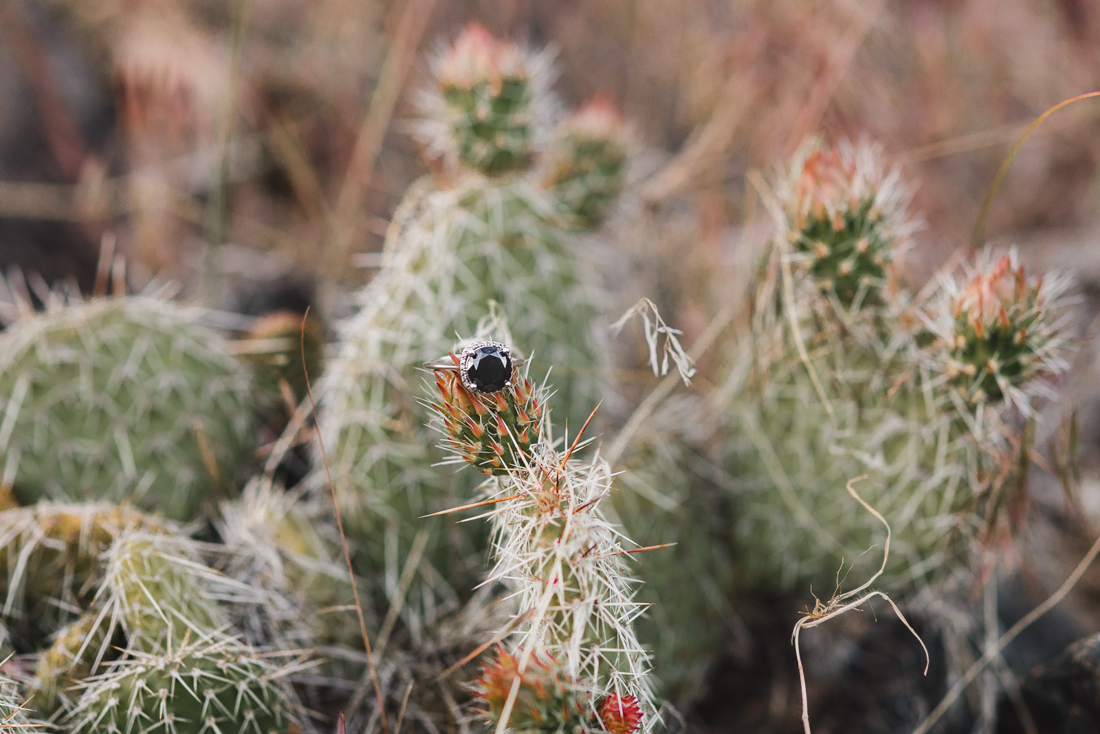 Engagement photography in Wyoming by Laramie based photographer, Encampment Wyoming, engagement ring, engagement ring with cactus, unique engagement ring