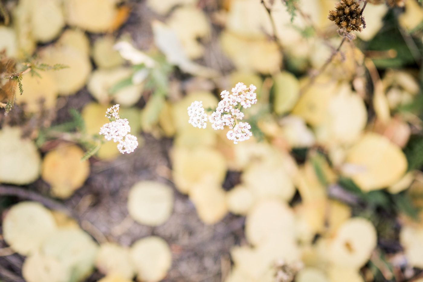 Fall Engagement Photos at Vedauwoo in Laramie, Wyoming